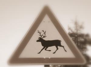 cartello_stradale_renna